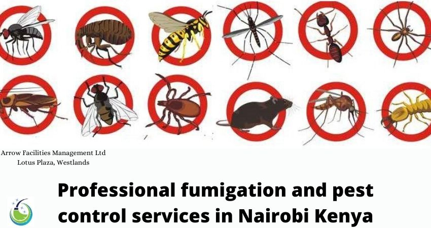 Professional fumigation and pest control services in Nairobi Kenya